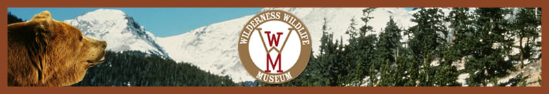 wilderness wildlife museum header